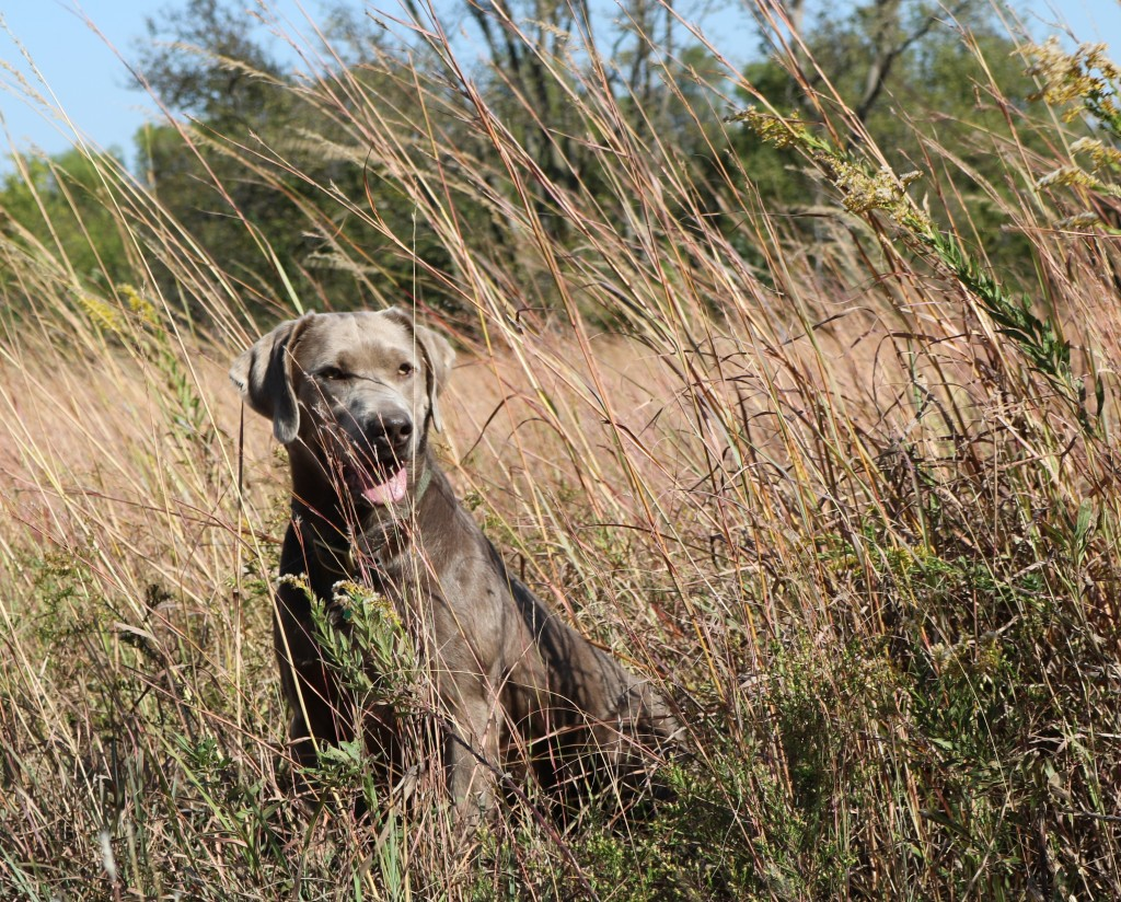 Jack in the tall grass